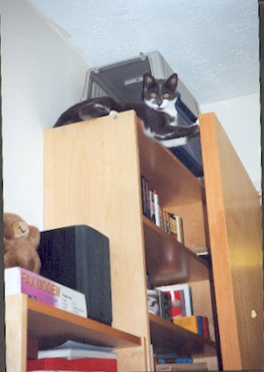 Her den, way up high on top of the bookcase